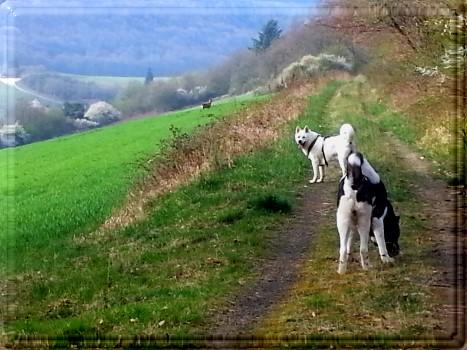 Wild und Hund – na und?