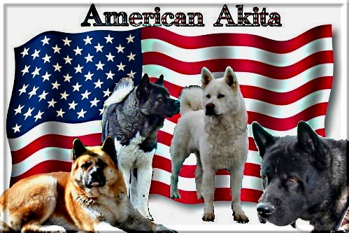 Bare Mountain - American Akita