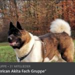 DIE American Akita Fach Gruppe