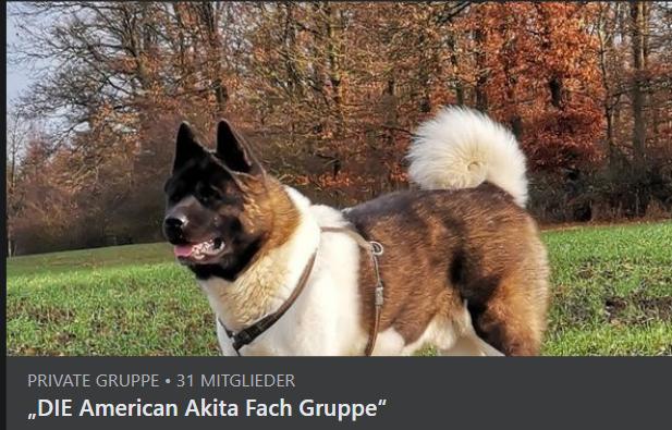 DIE American Akita Fach Gruppe Bei Facebook
