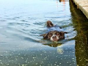 Yatho schwimmt