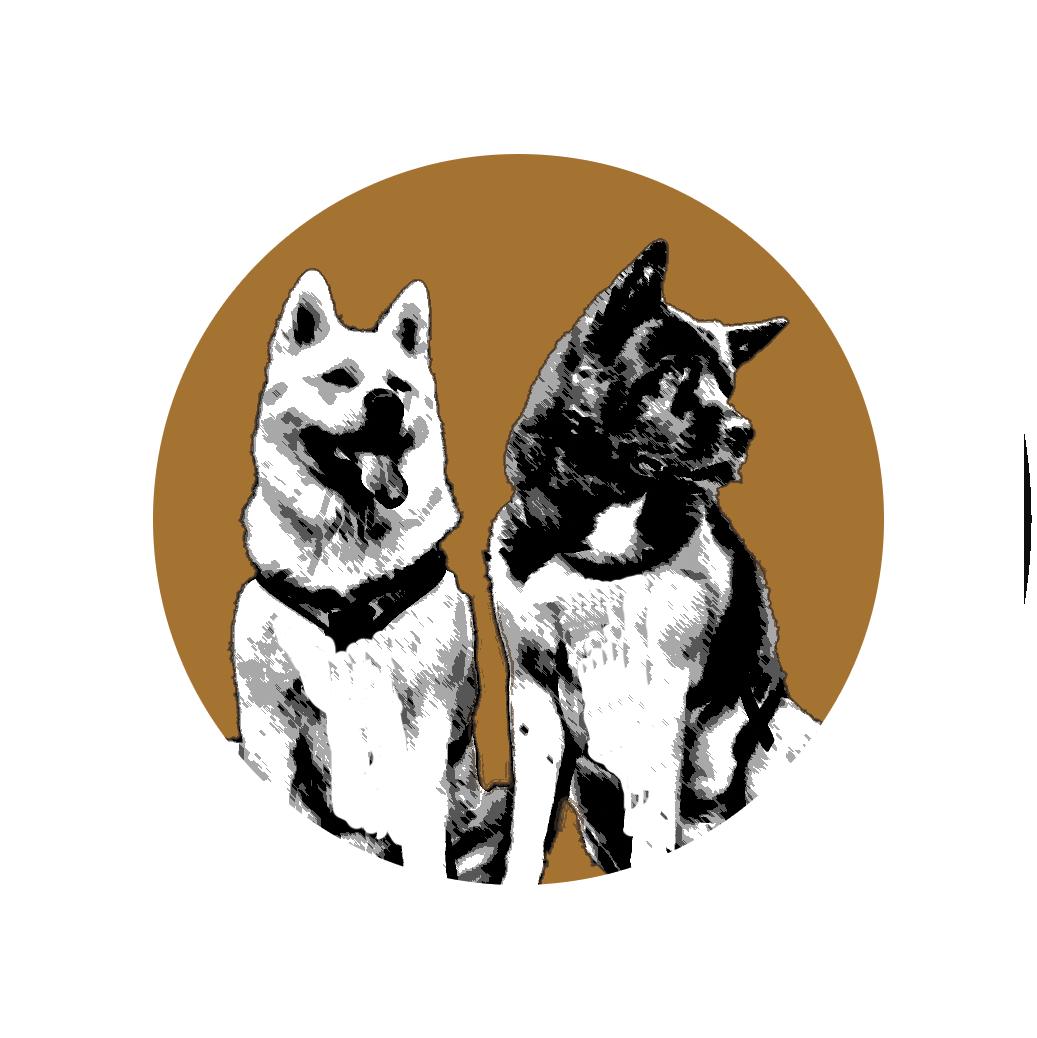 Bare Mountain American Akita